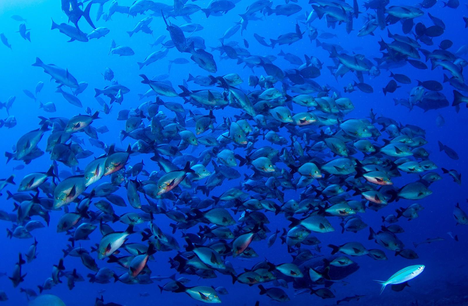 Beqa Lagoon | © Nick Hobgood / Flickr