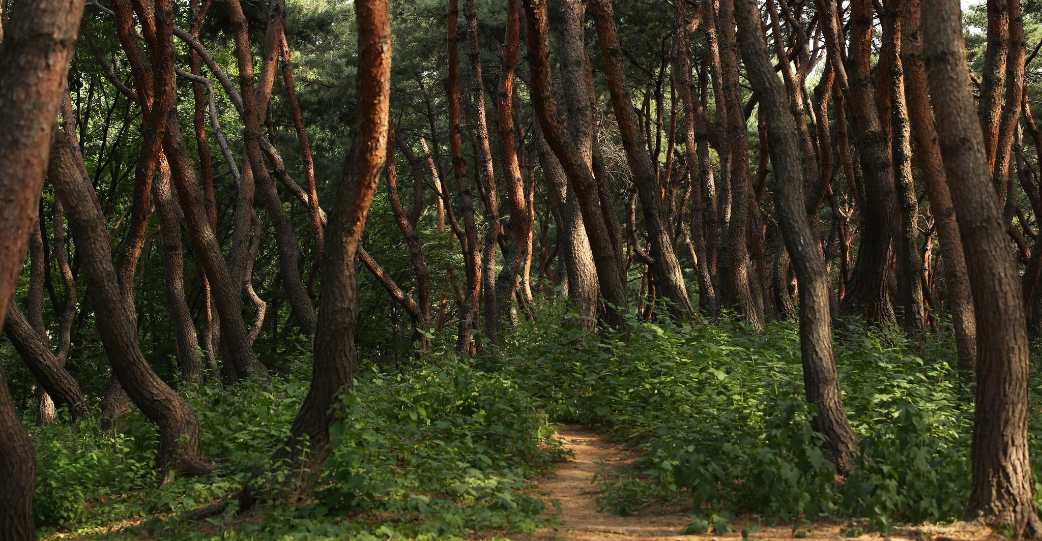The forests of Seolleung-Jeongneung in Seoul | © KoreaNet / Flickr