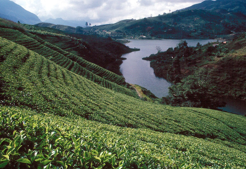 Sri Lanka tea plantations   ©  Wolfgangbeyer /WikiCommons