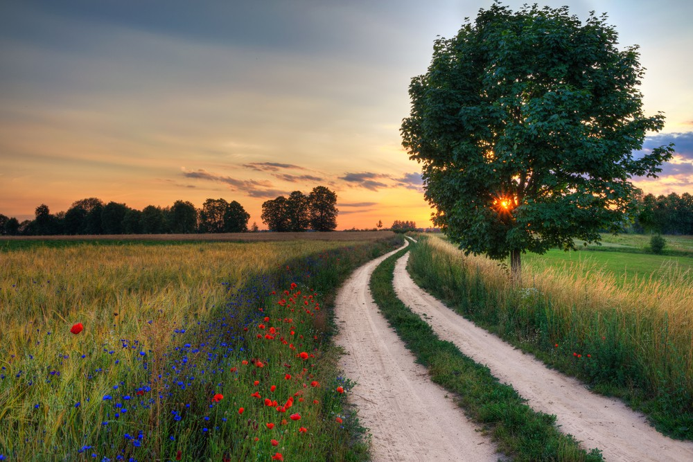 Summer landscape with country road and fields of wheat. Masuria, Poland | © ysuel/Shutterstock