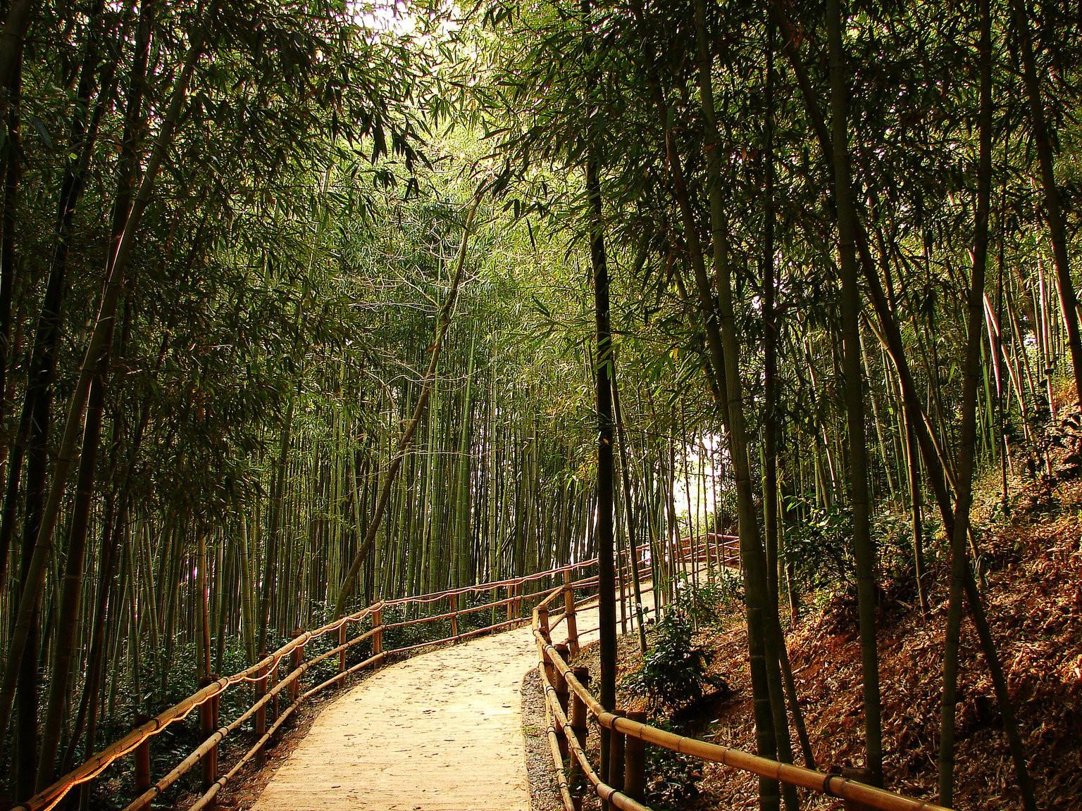 Damyang's Juknokwon (Bamboo Garden) | © Yeongcheol Lee / Flickr