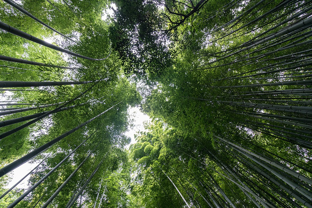 Bamboo Forest in Arashiyama, Kyoto | © Mark Choi 2017