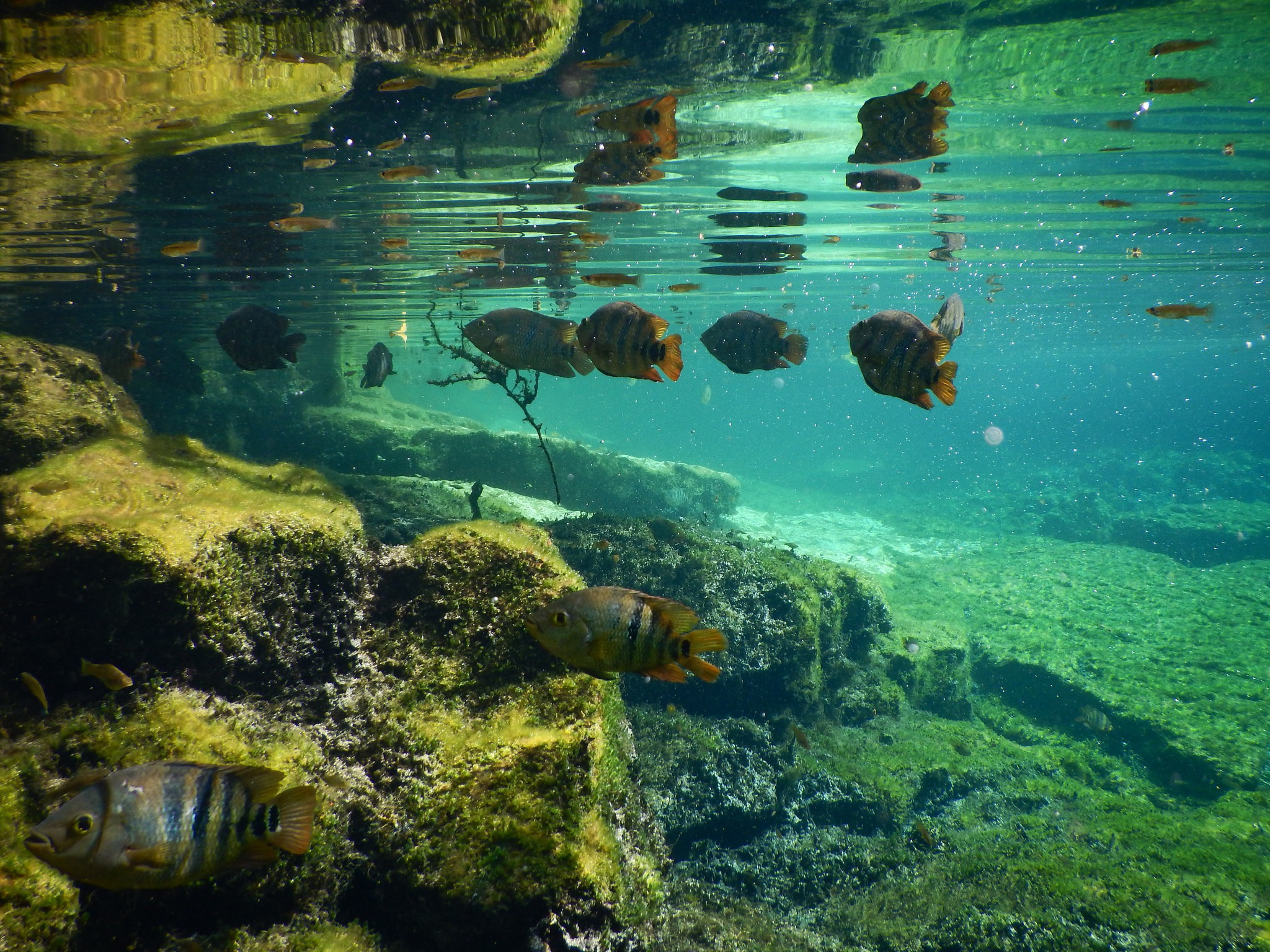 Cenote fish | © Lara Danielle / Flickr