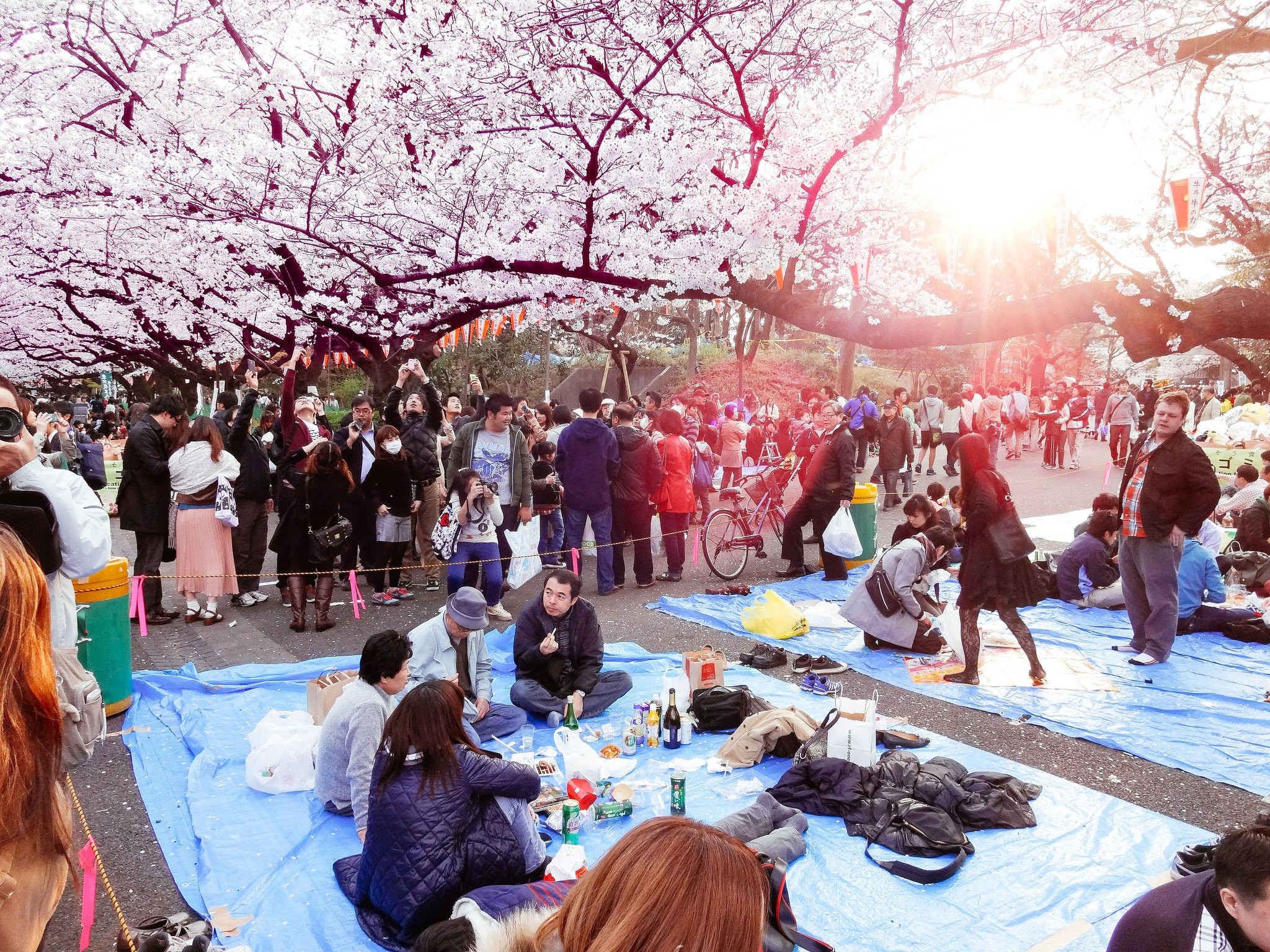 Hanami at Ueno Park 2013 | © Dick Thomas Johnson / Flickr