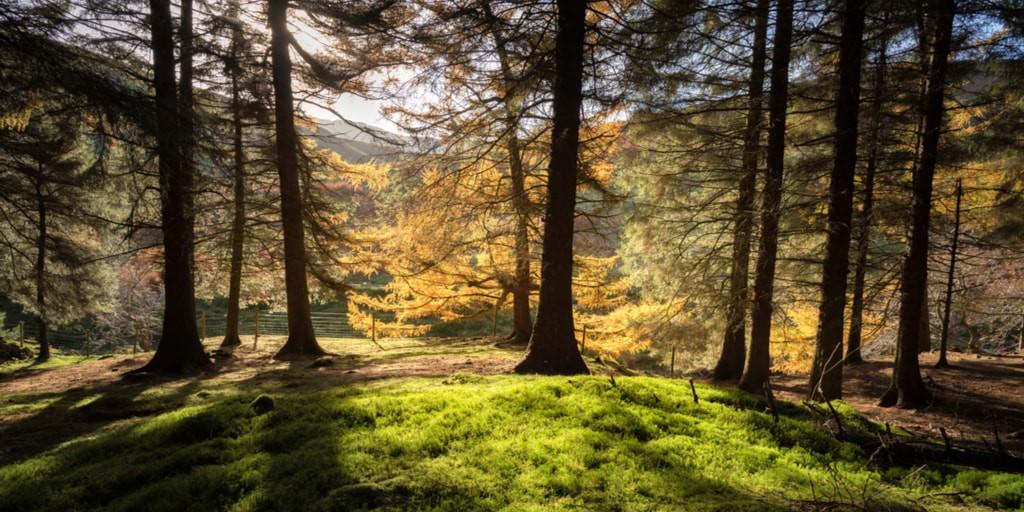Forest of Derbyshire   © Shahid Khan/Shutterstock