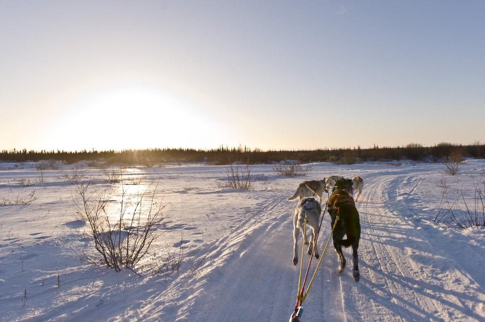 Wapusk Dog Sledding in Churchill   © Canadian Tourism Commission
