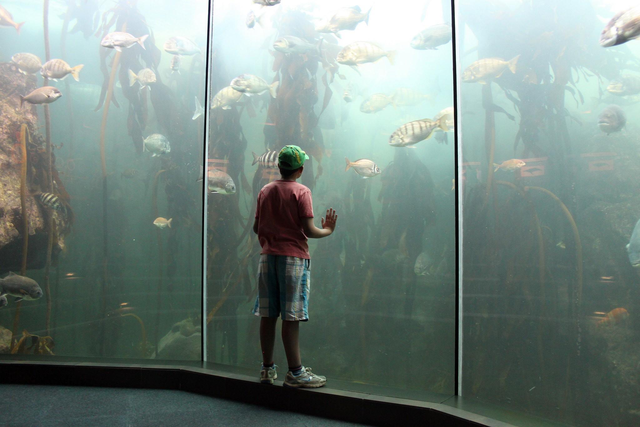 Two Oceans Aquarium | ©Flowcomm / Flickr
