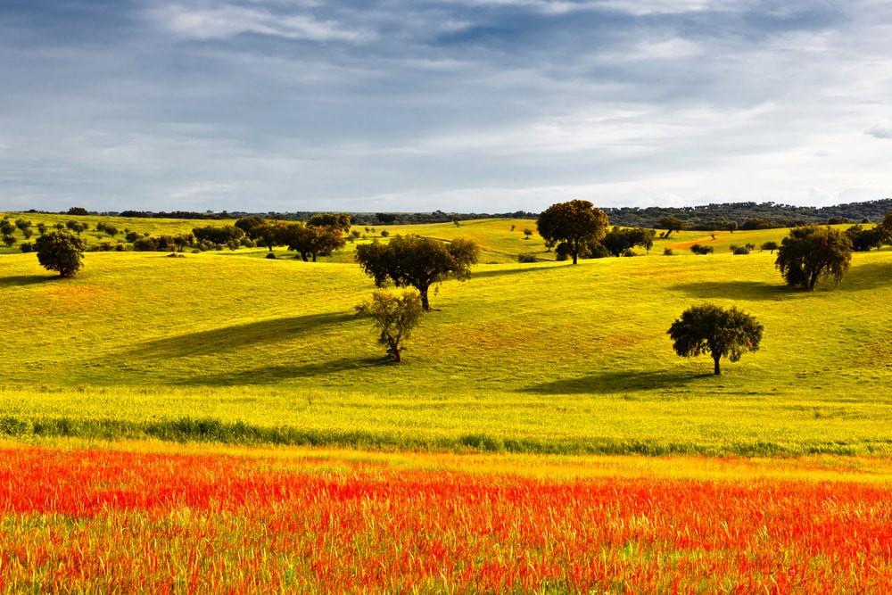 Alentejo during springtime | © Carpeira / Shutterstock