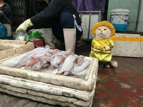 Cho at the seafood stall.  © Courtesy of Lê Quốc Phong