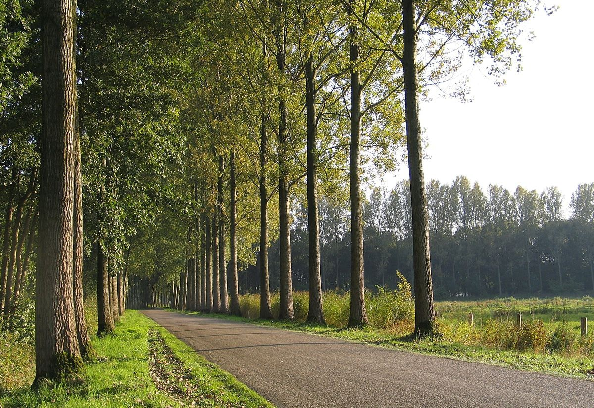 A country road in Best, the Netherlands
