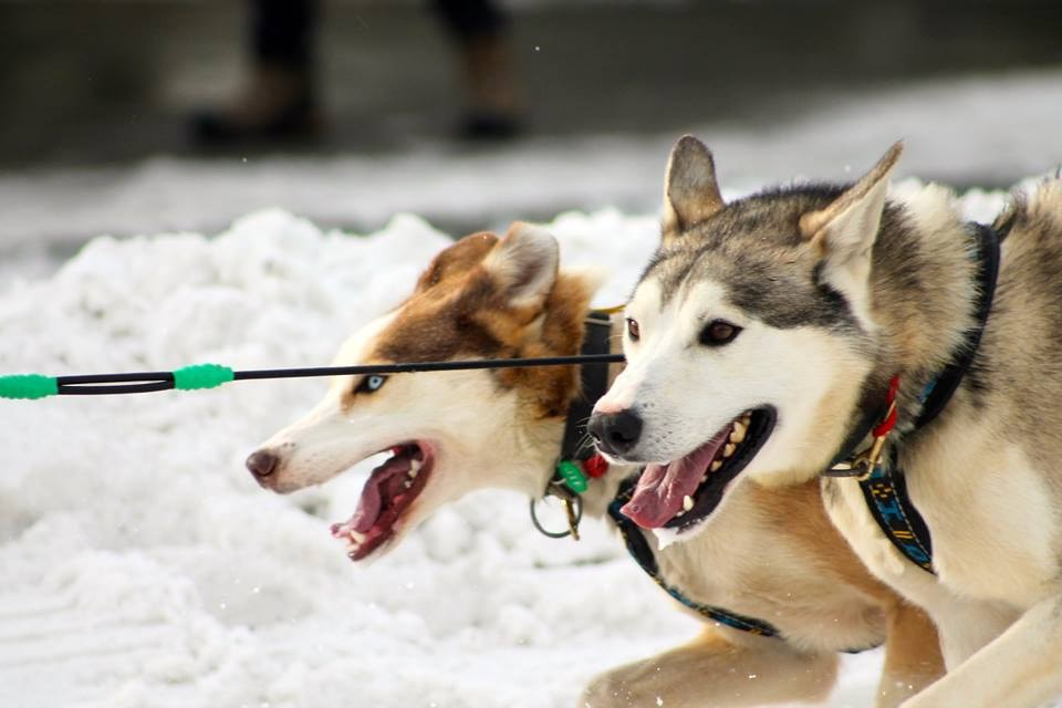 10 Things You Didn't Know About the Iditarod