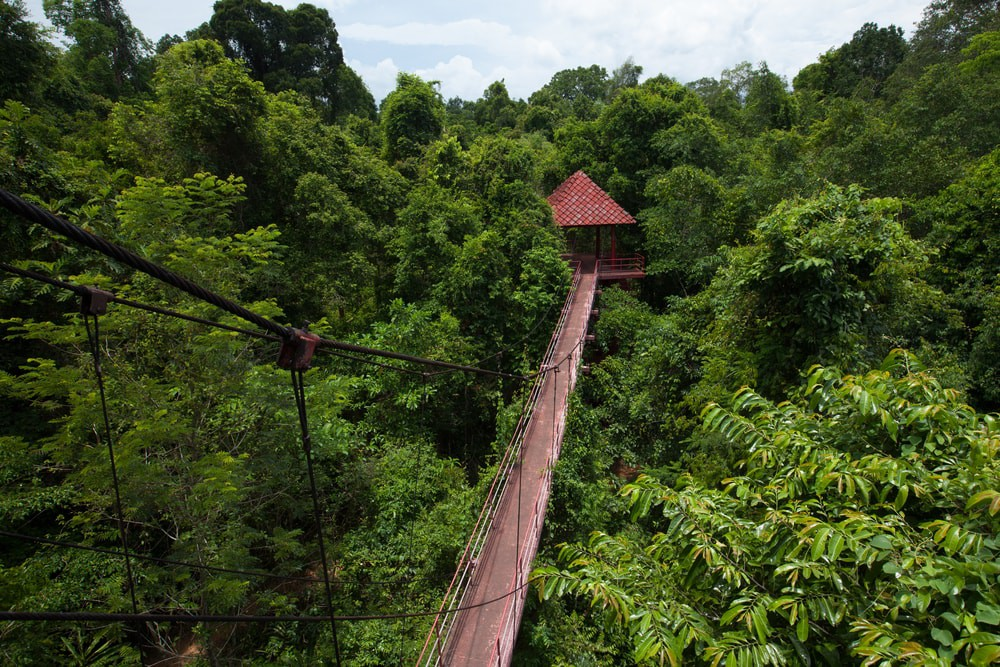 Try the canopy walks in Danum Valley & Danum Valley: Borneou0027s Untouched Jungle Paradise
