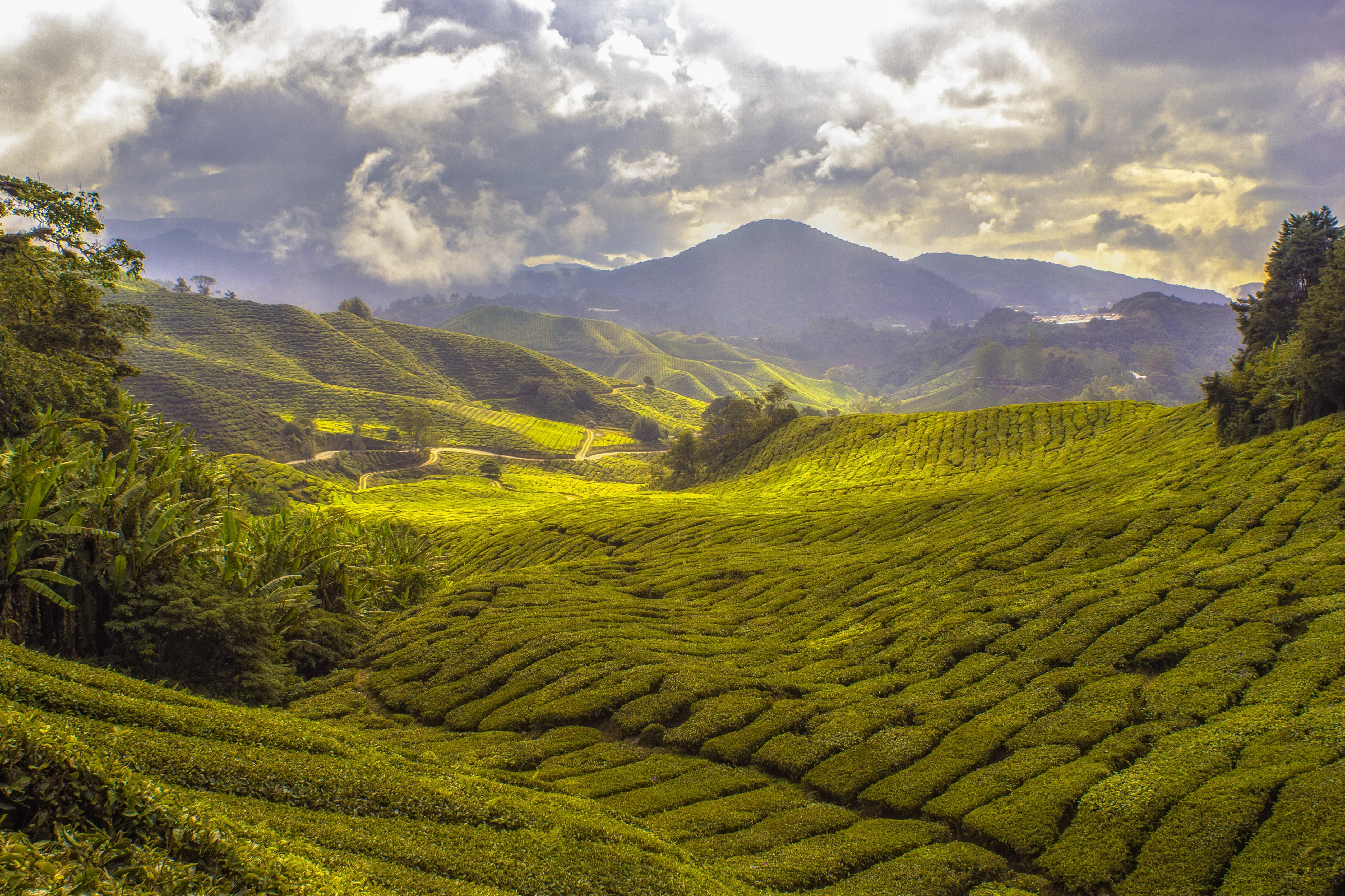 Malaysia - Art